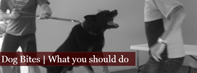 Dog Bites | What You Should Do